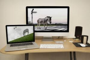 zebraes